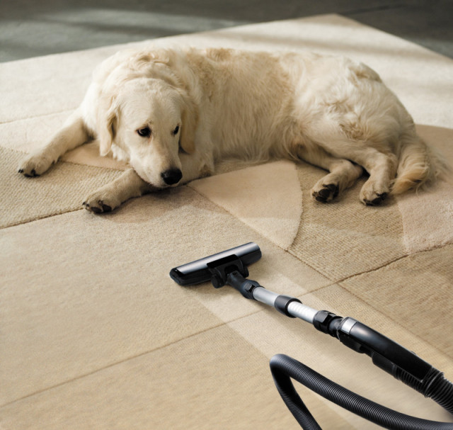 Pet Stain and Pet Odor Cleaning Services